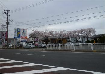 24427秋田市桜