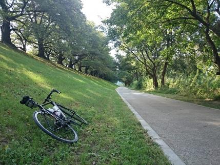 2014/09/23 八幡(淀川河川公園背割堤地区)