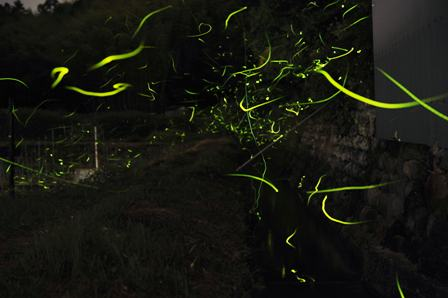 2012firefly01.jpg