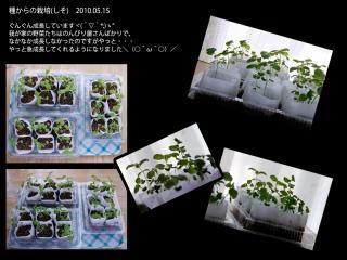 種からの栽培