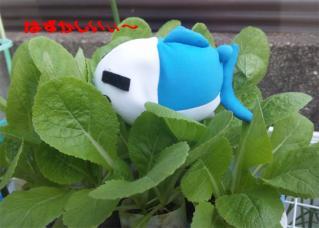 2010.11.16 白菜を食するお魚3