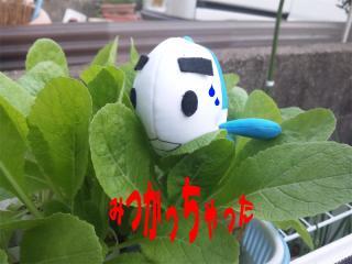 2010.11.16 白菜を食するお魚2