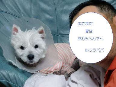 003_20120816021545.jpg