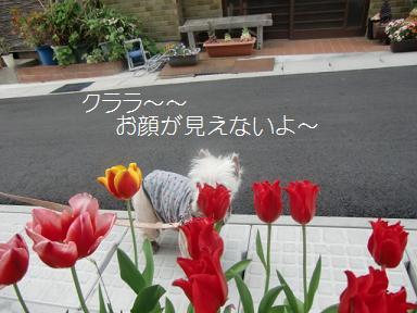 008_20120428011240.jpg