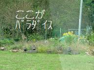 053_20121023074447.jpg