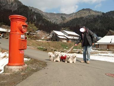 ピーチパパと白犬たち