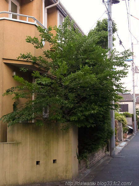 20120518_3.jpg