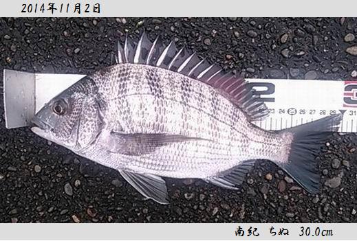 20141102taiji300.jpg