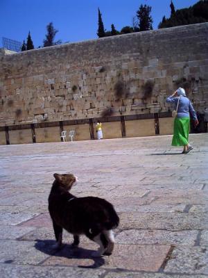 嘆きの壁の猫