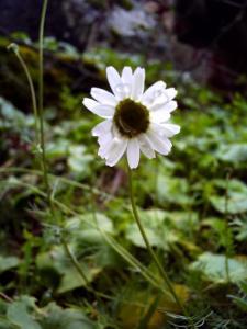 ウフララに咲く花