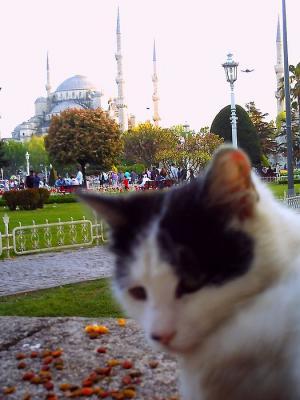 ブルー・モスク前の猫さん