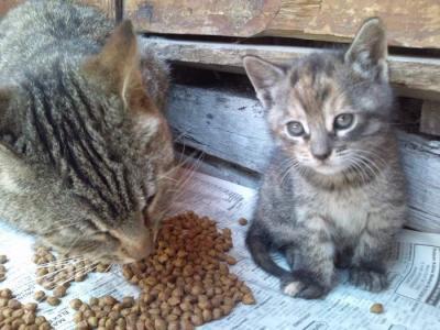 エユップ・スルタン・ジャミィの猫さん