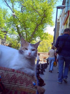 絨毯屋の猫さん