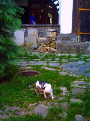 リラ僧院の猫