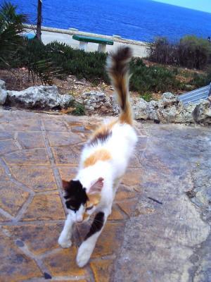 マルタ猫 (1)