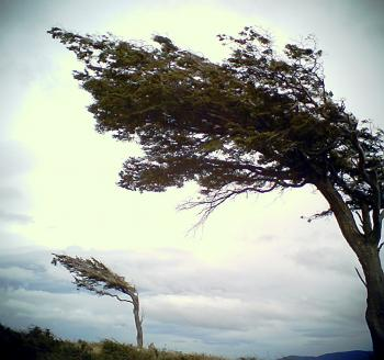 patagoniatree