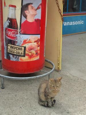 カザンラクの猫