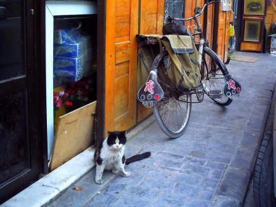 ダマスカスの猫
