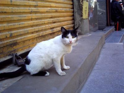ハーン・ハリーリの猫・1
