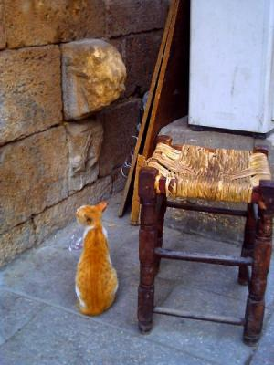 ハーン・ハリーリの猫・2