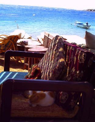 紅海を背に眠る猫