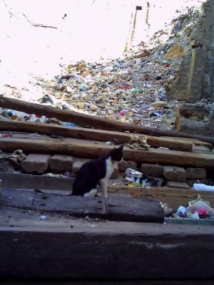 ゴミの町にたたずむ猫