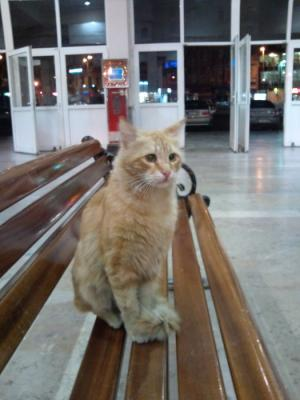 シルケジ駅の猫