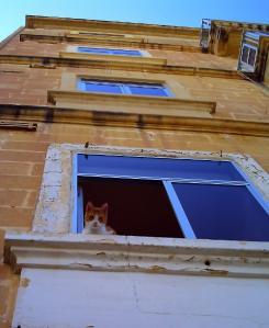 人間を見下ろすマルタの猫