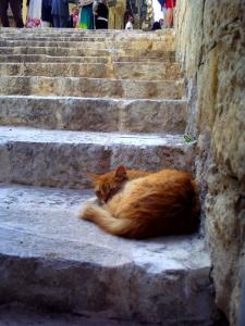 マルタ猫2