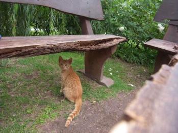 mini-cat.jpg