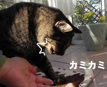 hamigakiro-pu-5