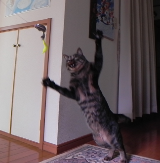 20130227001.png