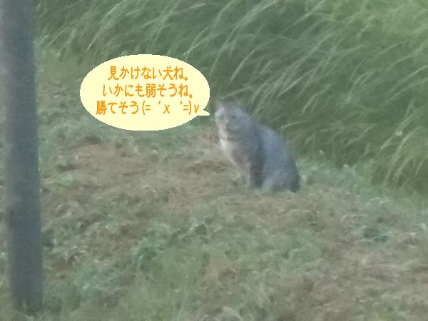 nana382 8月13日のナナ2