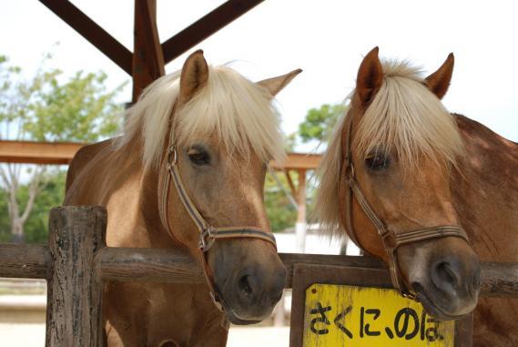 2010年9月5日北九州響灘 (55)