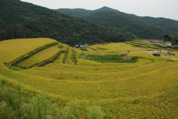 2010年9月26日大中尾棚田 (34)
