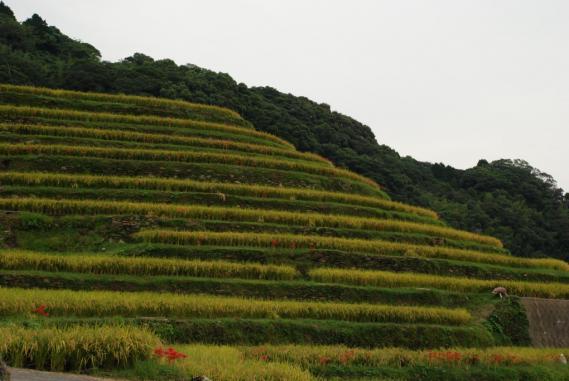 2010年9月26日大中尾棚田 (6)