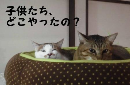 おっさん猫、気づく。