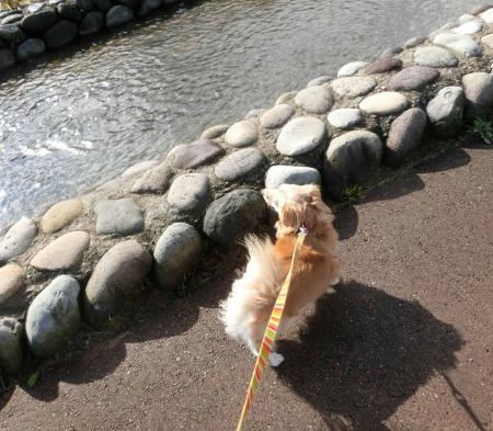 小川の散歩道