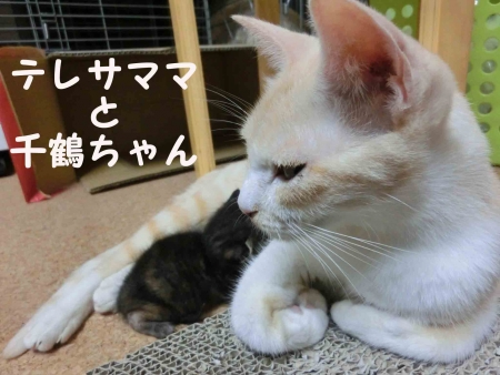 ママテレサと千鶴
