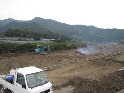 清見オレンジ畑4
