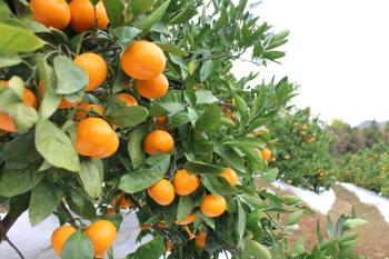 濃いオレンジに