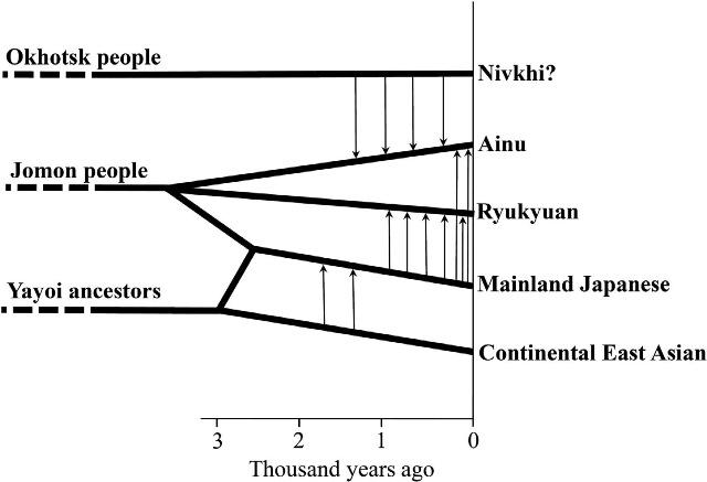 図5:今回の結果および考古学的知見をもとにして、日本列島人の遺伝的な変遷を予想したもの