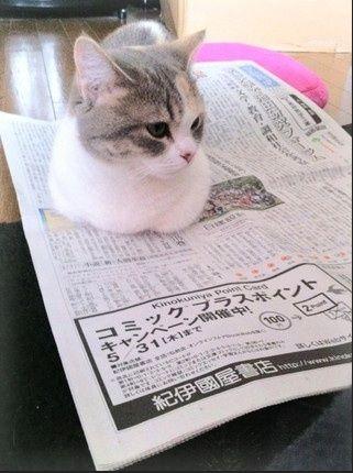 高橋みなみは創価学会員!聖教新聞を購読!