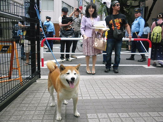 2012.7.1片山さつき議員応援デモ  久しぶりの愛国犬と一緒に撮影する