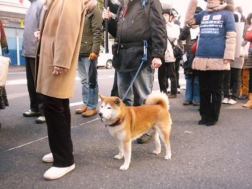 2012.2.19韓国は即刻竹島から出て行け日本国民による大規模デモin浅草(愛国犬)