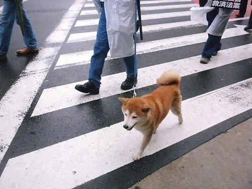 2012.3.31人権救済機関設置法案成立反対デモin新宿 愛国犬