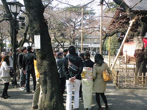 2012年3月31日東京の桜の開花を告げた靖国神社境内の能楽堂の横にあるソメイヨシノの標本木には、多くの人が集まっていた(4月1日)