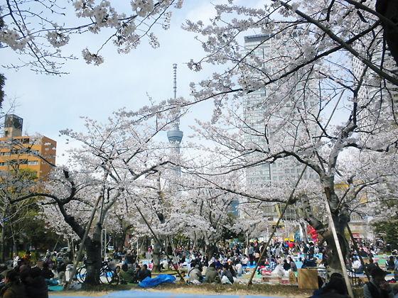 錦糸公園2012年4月7日桜満開