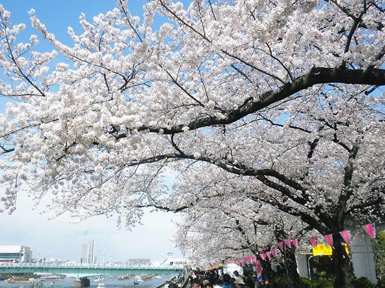 隅田公園2012年4月7日桜満開