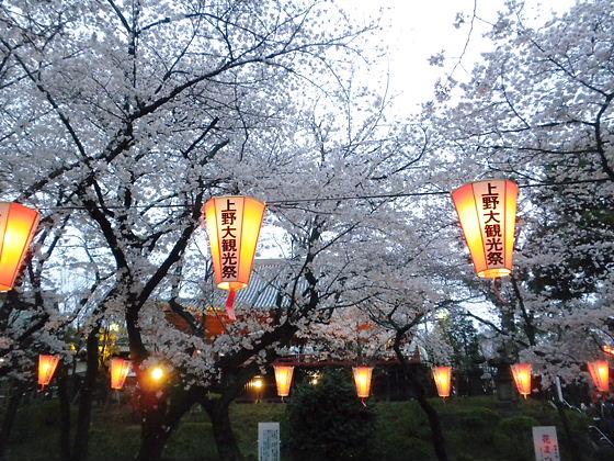 上野公園2012年4月7日桜満開